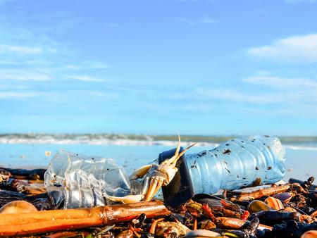 Bouteille en plastique, coquillages et crabe mort sur du sable mouillé jeté par la vague de la mer . La pollution. Notion d'écologie.