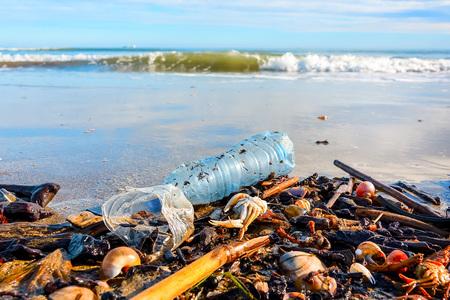 Bouteille en plastique, coquillages et crabe mort sur du sable mouillé jeté par la vague de la mer . La pollution. Notion d'écologie. Banque d'images