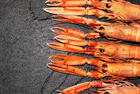 cooked Langoustines ,Nephrops norvegicus, Dublin Bay Prawn or Norway Lobsters on black slate