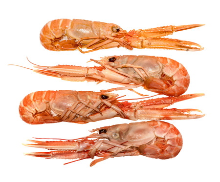 Langoustines ,Nephrops norvegicus, Dublin Bay Prawn or Norway Lobsters isolated on a white background Фото со стока
