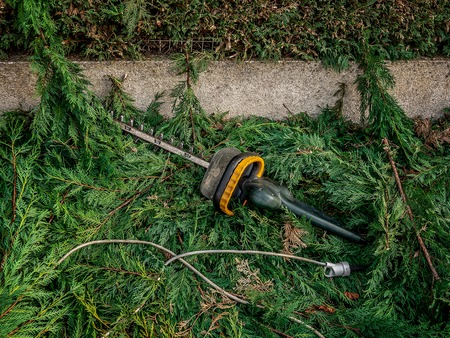 hedge clipper on the ground in the branches of cypress after garden work on trimming hedges.. Фото со стока