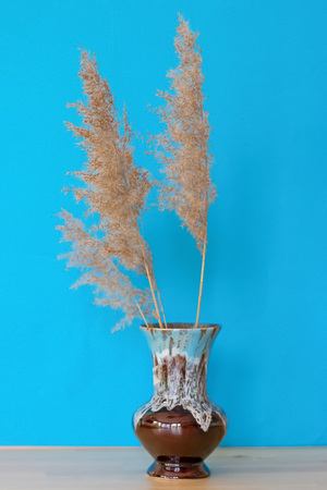 Dry flowers Cortaderia Selloana known as Pampas grass. Family: Poaceae dry flowers in a vintage vase on a blue background . Side view. Close up. Minimalism. Imagens
