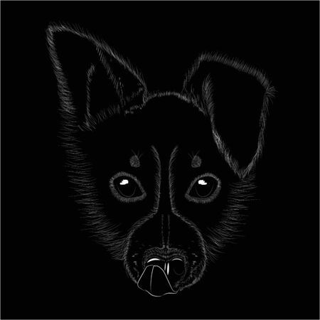The head of the dog puppy border collie with tongue on a black background is made with white strokes imitating wool.