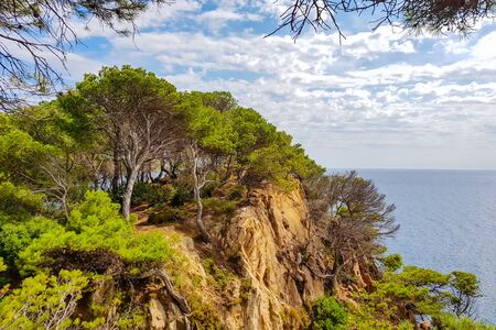 The rocky steep coast of the Mediterranean Sea is planted with pine trees.