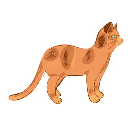 A red spotted cat is standing in profile. Hand draw. Illustration