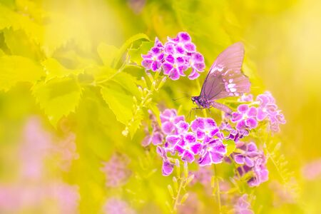 Flowers and butterfly yellow background with copy-space Stockfoto