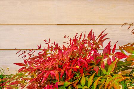 background of wooden boards and autumn red-green leaves with copy space
