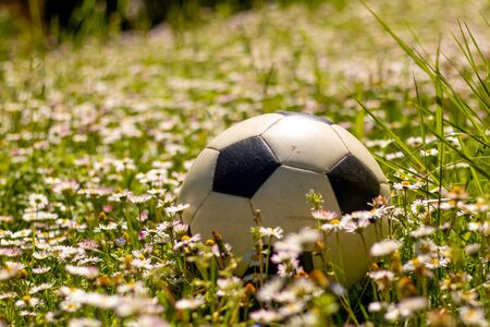 Soccer ball on the field of daisies flowers Stockfoto