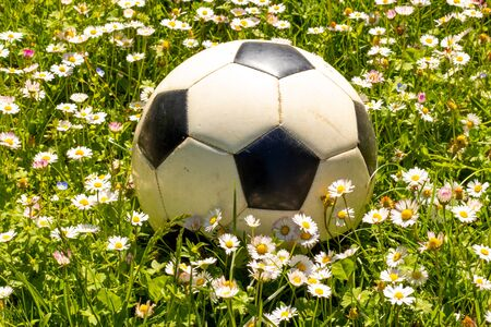 Soccer ball on the field of daisies flowers close-up