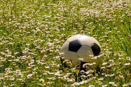 Soccer ball on the meadow of daisies flowers