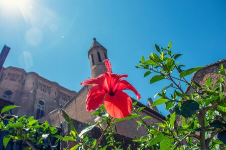 Close-up of red hibiscus flower against the background of a brick old building and blue sky. Stockfoto