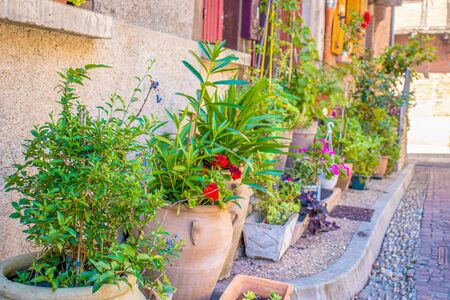 Flowers in pots and flowerbeds to decorate a beautiful French courtyard
