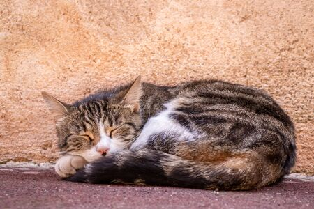 Close-up of a striped ginger cat sleeping on the street