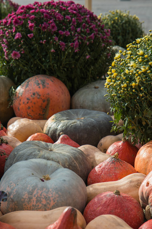 Composition from orange and green pumpkins ,flowers and wheat for Thanksgiving day