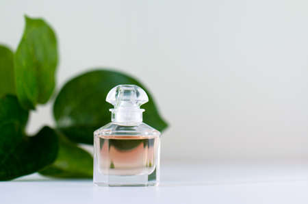 A bottle of perfume on a background of green leaves. The concept of female beauty