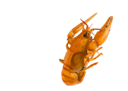 arthropods: Isolate arthropods crustaceans cancer  welded the view from the back