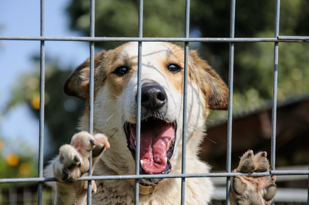 Humane: Closeup of a dog looking through the bars of a fance, outdoor