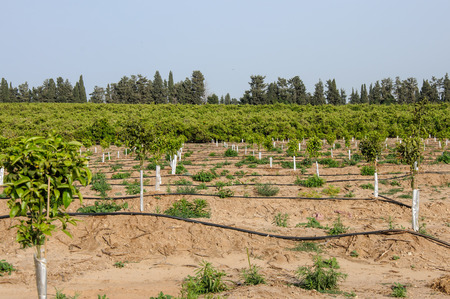 replenish: newly planted young trees