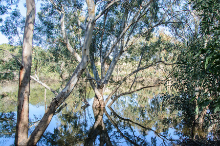 Landscape with reflection of  trees in water. Beautiful branches reflection in river