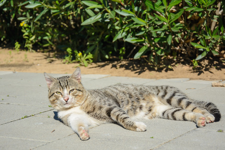 Stray cat lying on the ground photo