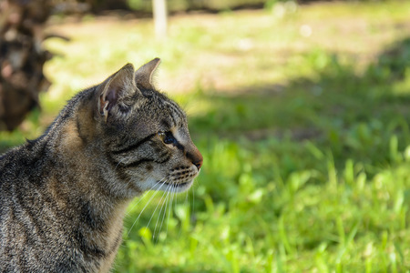 Portrait of tabby Stray cat Stock Photo