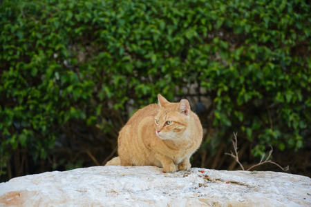 Red Street cat eats food on the rock in the park