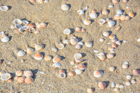 Sand and shells natural summer background Stock Photo