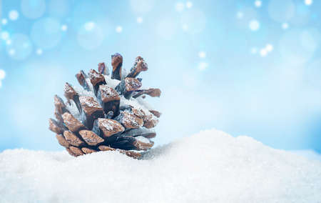 one pine cone in the snow on a blue background