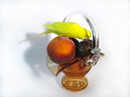 vase with fruit and a yellow wavy parrot on a white background. photo
