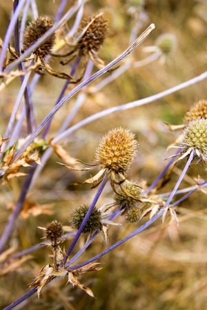 wild prairie: wild flowers and herbs are growing in prairie in warm colours