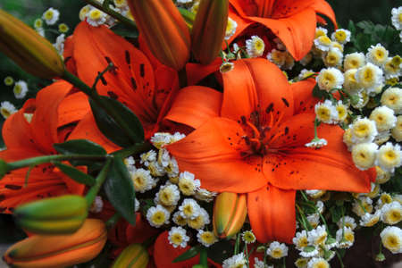 large bouquet of orange lilies with green leaves and buds and field daisies close-up 免版税图像
