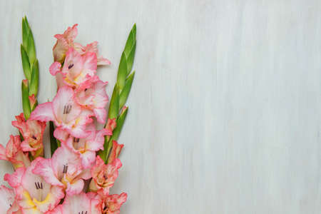 Bouquet of pink and yellow gladioli on a white wooden background top view with empty space for text, close-up, greeting card concept, template and element for design Stock Photo