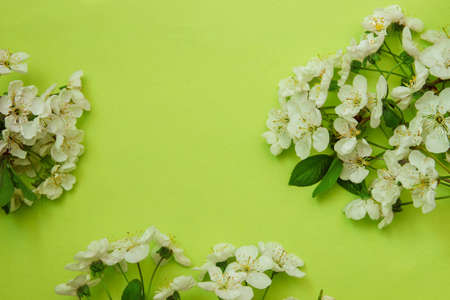 Frame of white cherry flowers close-up top view on a bright green background, greeting card concept, design, decoration, greeting with empty space for text, template Zdjęcie Seryjne
