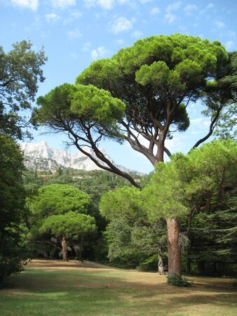 Sunny glade on the background of Mount Ai-Petri. Vorontsov Park, Alupka, Crimea 免版税图像