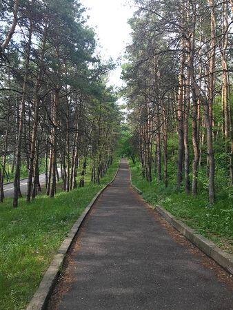 An asphalt road going through pine forest. Trees are closing over the road. The concept of freedom, suspense, adventure, curiosity Banque d'images