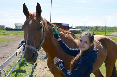 A young brunette woman in a blue hoodie gently brushes a bay horse and looks into the camera on a sunny summer day Stock Photo