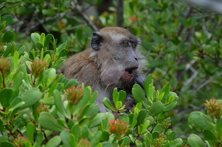A little brown soaked monkey with her baby on the chest sits in the branches of a tree and looks away. The monkey wipes her mouth soiled after eating. Mom with the baby. Side view