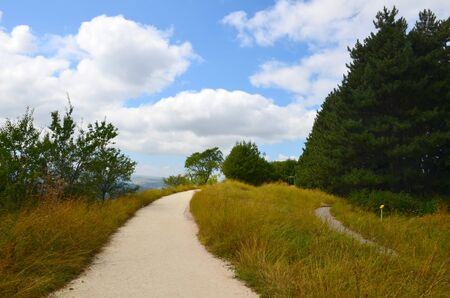 Sandy path, going up through a meadow of yellow and green grass surrounded by trees against a blue sky with clouds on a summer day. The concept of freedom, suspense, curiosity, adventure