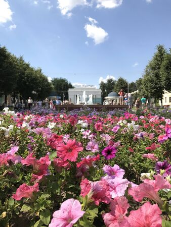Closeup of a flowerbed with pink flowers. In the background, silhouettes of people walking in the park and a gate with the inscription in Russian Park of Culture against a blue sky with clouds