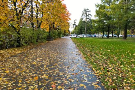 Autumn city landscape. Yellow and red trees and fallen leaves on a green lawn and asphalt path. In the background, car parking
