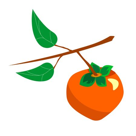 Set with persimmon.Vector of persimmons on a tree branch with leaves. In flat style illustration. Stock Illustratie