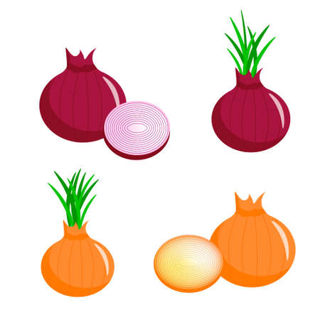 Set of different types of onions. Illustration for logos and designs.