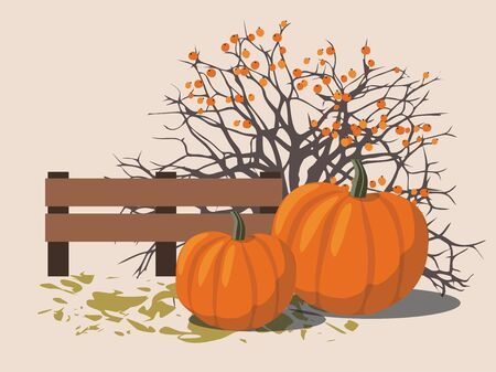 Pumpkins next to the berry Bush.