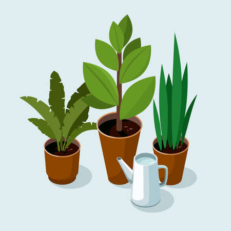 Different house plants with green leaves in pots and watering can on blue background. Illusztráció