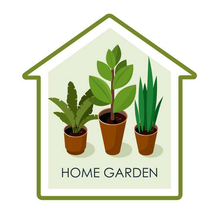 Different house plants with green leaves in pots. Home flowers. Vector Illusztráció