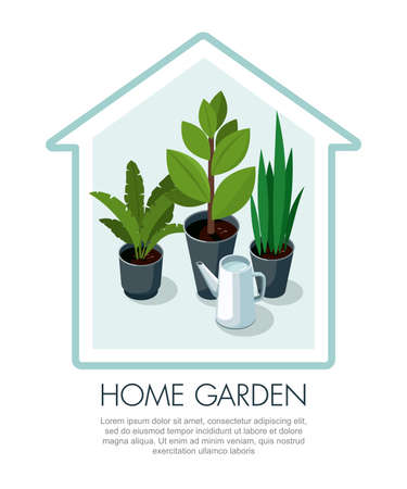 Different house plants in pots and  watering can. Home flowers. House shape. Vector
