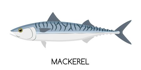 Mackerel. Commercial Fish species. Colored Vector Illustration. Flat Icon. White Isolated Background