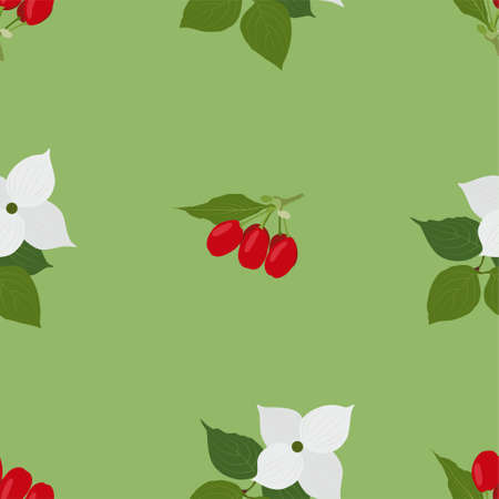 Dogwood berry. Fresh and healthy food.