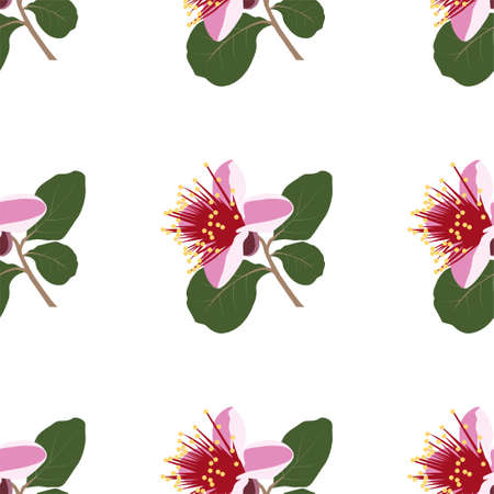 Botanical seamless pattern with Feijoa flowers.