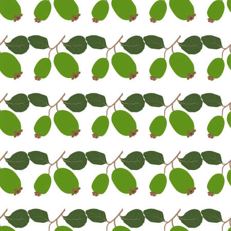 Feijoa. Fresh and healthy food. Seamless Vector Patterns  イラスト・ベクター素材
